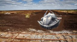 Whale Washes Ashore In County Offaly