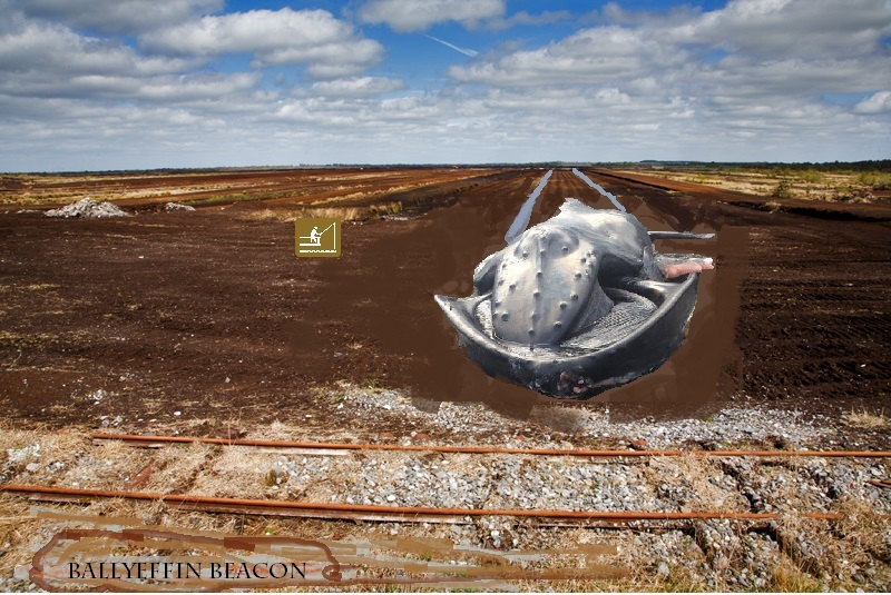 Beached Whale in Ireland. Offaly Whale.