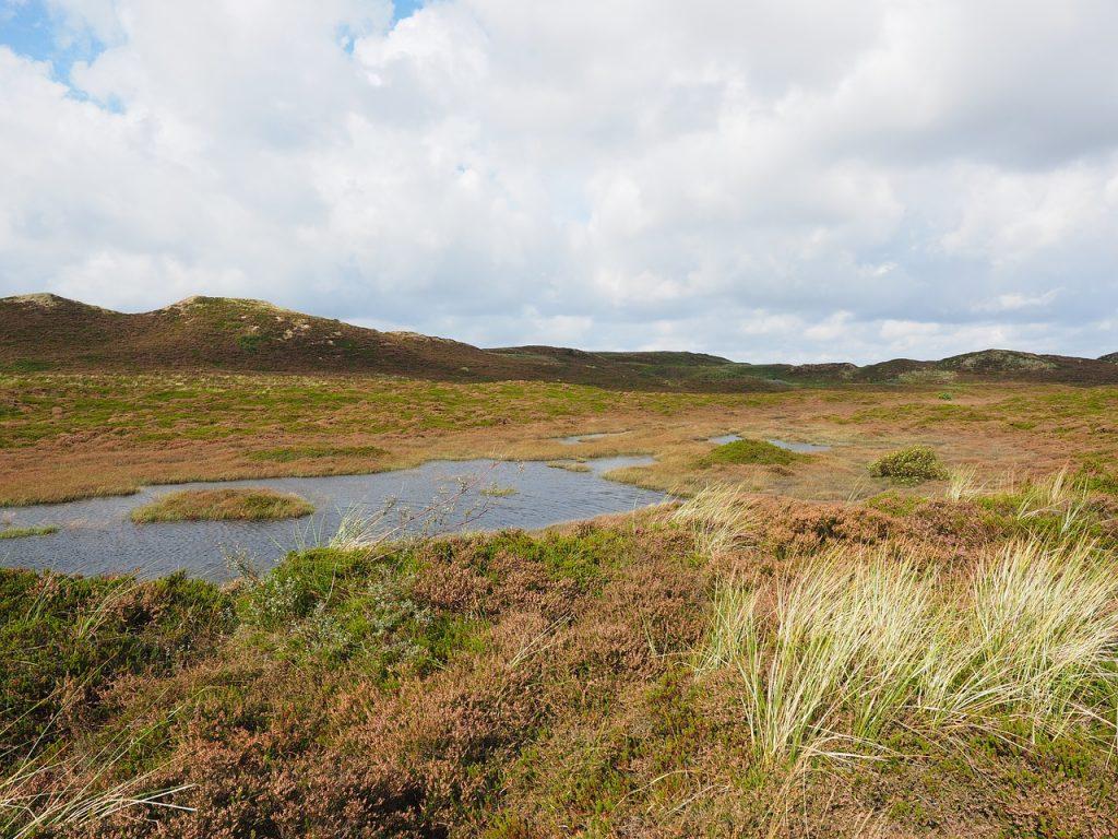 Camel Country on the Ballyeffin Boglands